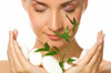 Skin Protection Herbs